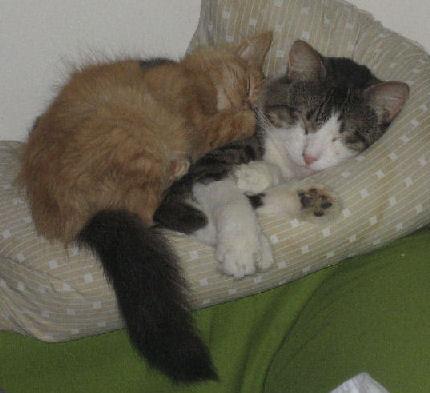 Bedtime Buddies