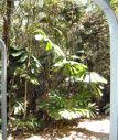 jungleplantRE