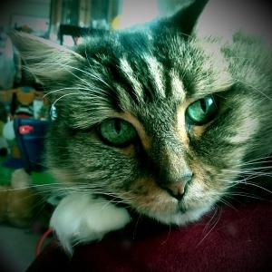 Molly.