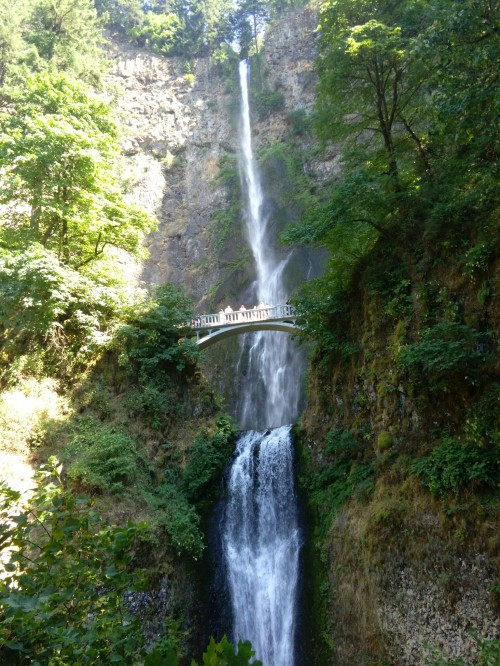 Multnomah Falls.  That's the bridge we hiked to and walked across!
