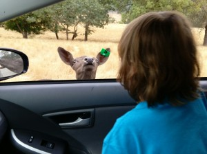 I told him that animals might want to pop their heads in to check him out as we drove through Wildlife Safari in Winston, Oregon.  He didn't believe me until this happened.  And yes, the window was open!